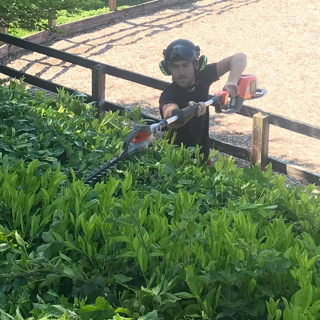 man trimming hedge